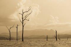 Dode bomen in het meer Royalty-vrije Stock Foto's