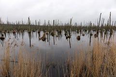 Dode bomen in het meer Dode bomen in een moeras Dode bomen in een water stock afbeeldingen