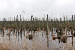 Dode bomen in het meer Dode bomen in een moeras Dode bomen in een water stock afbeelding