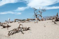 Dode bomen in het Nationale Park van de Doodsvallei, Californië Stock Foto's