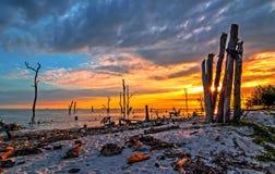 Dode bomen in het overzees bij een geërodeerde kustlijn bij Kelanang-strand Stock Afbeelding