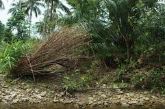 Dode bomen langs de rivier in de aardkust van Thailand Stock Foto