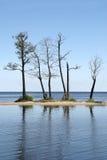 Dode bomen in meer Stock Fotografie