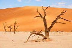 Dode bomen in Namibië Stock Afbeeldingen
