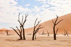 Dode bomen in Namibië Stock Foto