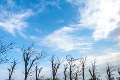 Dode bomen onder blauwe hemel Stock Afbeeldingen