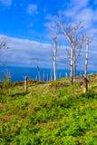 Dode bomen op een overzeese kust royalty-vrije stock foto's