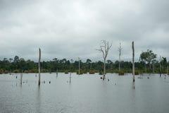 Dode bomen op een waterdam Royalty-vrije Stock Afbeeldingen