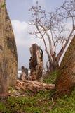 Dode bomen op het strand Royalty-vrije Stock Foto