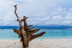 Dode bomen op het strand Royalty-vrije Stock Afbeeldingen