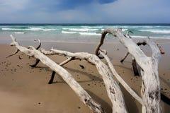 Dode bomen op het strand Stock Foto