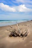 Dode bomen op het strand Stock Afbeelding