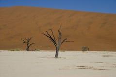 Dode Bomen in Woestijn Namib Stock Afbeelding