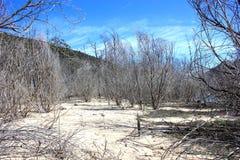 Dode bomen in zandige bushland Stock Afbeeldingen