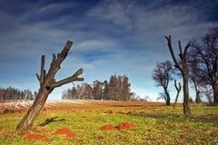 Dode boom Stock Afbeeldingen