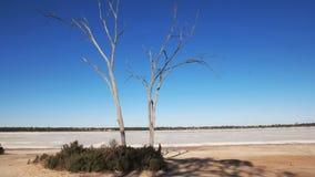 Dode boom bij een het westen Australische zoute pan stock video