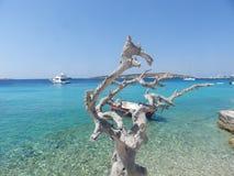 Dode boom bij een tropisch strand stock afbeelding