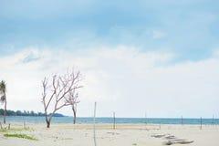 Dode boom bij strand Royalty-vrije Stock Afbeelding