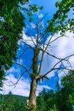 Dode boom in de blauwe hemel stock afbeeldingen