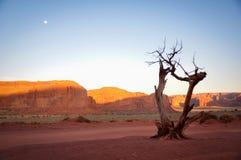 Dode boom in de Vallei van het Monument royalty-vrije stock foto