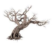 Dode boom die op witte achtergrond wordt geïsoleerde Royalty-vrije Stock Foto