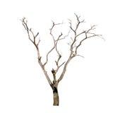 Dode boom die op witte achtergrond wordt geïsoleerde Royalty-vrije Stock Fotografie