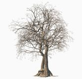 Dode boom die op witte achtergrond wordt geïsoleerde stock illustratie