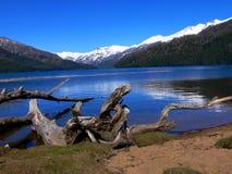 Dode boom door het meer Royalty-vrije Stock Fotografie