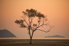 Dode boom door het overzees. Royalty-vrije Stock Foto