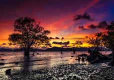 Dode boom door het overzees met de mooie ochtendzon Royalty-vrije Stock Afbeelding