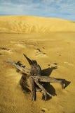 Dode boom in een zandwoestijn Stock Afbeeldingen