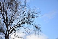 Dode boom en blauw-hemelachtergrond Royalty-vrije Stock Afbeeldingen