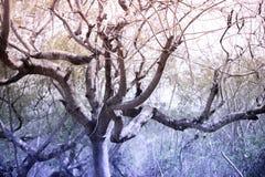 Dode boom en blauwe hemel in het grote bos royalty-vrije stock afbeeldingen