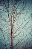 Dode boom en blauwe hemel in het grote bos stock fotografie