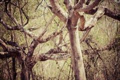Dode boom en blauwe hemel in het grote bos royalty-vrije stock foto's
