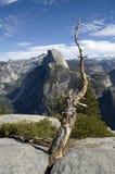 Dode boom en Halve Koepel in Nationaal Park Yosemite Royalty-vrije Stock Foto's