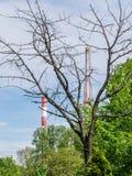 Dode boom en schoorstenen stock afbeeldingen
