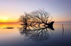 Dode boom en zon en overzees en hemel Royalty-vrije Stock Afbeeldingen