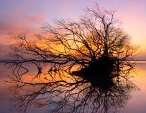 Dode boom en zon en overzees en hemel Royalty-vrije Stock Afbeelding