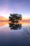 Dode boom en zon en overzees en hemel en boom Stock Fotografie