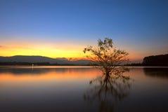 Dode boom in het meer bij zonsopgang Royalty-vrije Stock Foto's