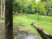 Dode boom in het park Royalty-vrije Stock Afbeeldingen
