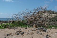 Dode boom in het zand Stock Afbeelding