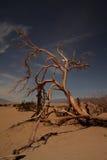 Dode boom in het zandduinen van de doodsvallei Royalty-vrije Stock Fotografie