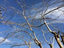 Dode boom met blauwe hemel royalty-vrije stock foto's