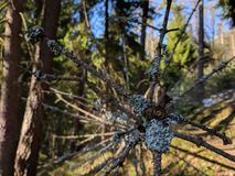Dode boom met takken stock foto's