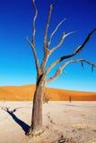 Dode boom, Namib Woestijn, Namibië Stock Afbeelding
