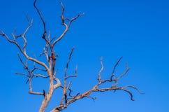 Dode boom onder blauwe hemel Stock Afbeeldingen