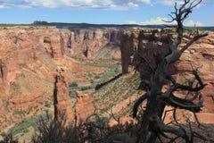 Dode boom op Amerikaanse canionachtergrond stock fotografie