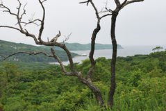 Dode boom op de achtergrond van weelderige vegetatie Stock Foto's